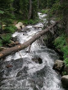 2012-07-24 TreeStream