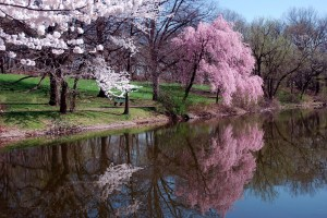Lake_trees